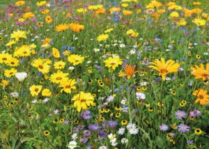Nova Flore Champigné Les Hauts d'Anjou Solutions Naturelles Solutions Naturelles aux Herbicides