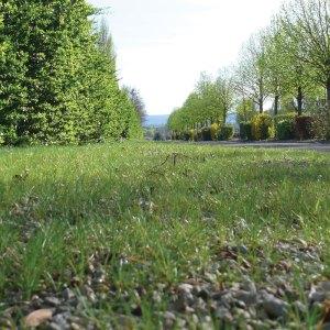 Nova Flore Champigné Les Hauts d'Anjou Solutions Naturelles Végétalisation