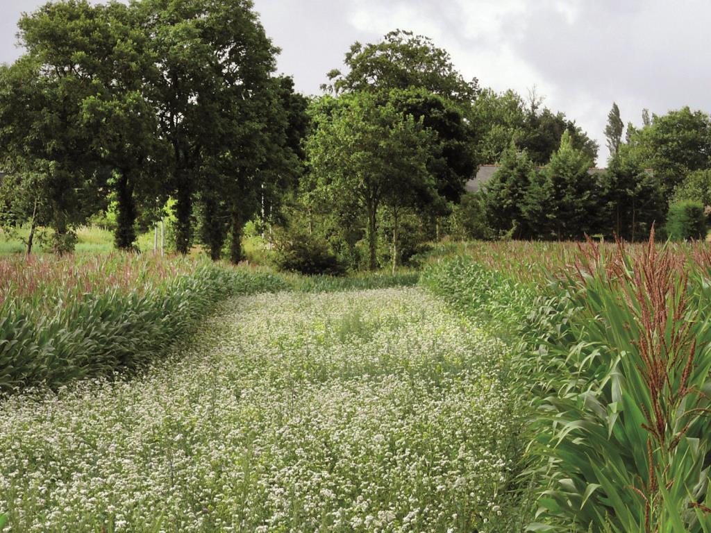 Gamme Jachères Fleuries Nova -Flore Champigné