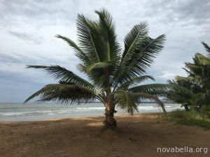 caribe 162