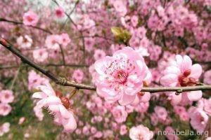flower-705159_960_720