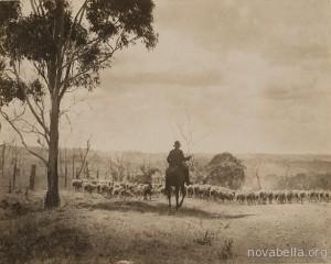 Australian_Stock_Route_(Berrima_district)_1925