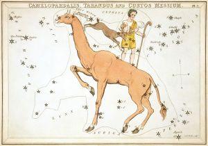Sidney_Hall_-_Urania's_Mirror_-_Camelopardalis,_Tarandus_and_Custos_Messium (4)