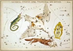 Sidney_Hall_-_Urania's_Mirror_-_Lacerta,_Cygnus,_Lyra,_Vulpecula_and_Anser (4)
