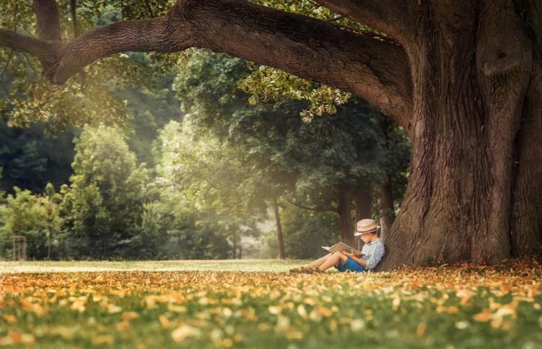 chłopiec czytający pod drzewem