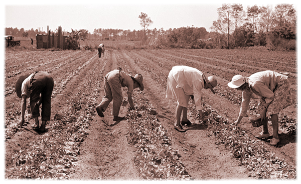 Sarcoxie Missouri - Strawberry Pickers