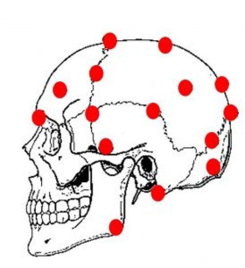 ciclo neurovascolare