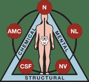 simbolo della kinesiologia applicata generale