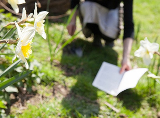 A photograph of Liisa's performance where she holds Joseph Conrad's work over daffodil beds.