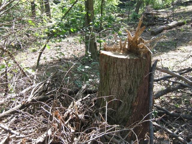 Zelena patrola uslišila vapaj rukovodstva NP Fruška gora: Organizuje obuku za drvoseče, sve dok postoji drveće na Fruškoj gori