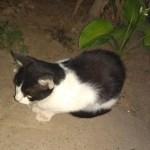 Rajko Dvizac: Marko – mačka koja je ispala veći čovek od mnogih ljudi koje znam