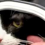 Mačka preživela pranje u veš mašini (VIDEO)