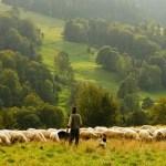 Za posao pastira na usamljenom ostrvu mesečno daju petogodišnju srpsku platu