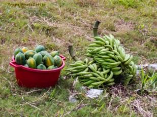 Wielkie kiście bananów i miska owoców mango