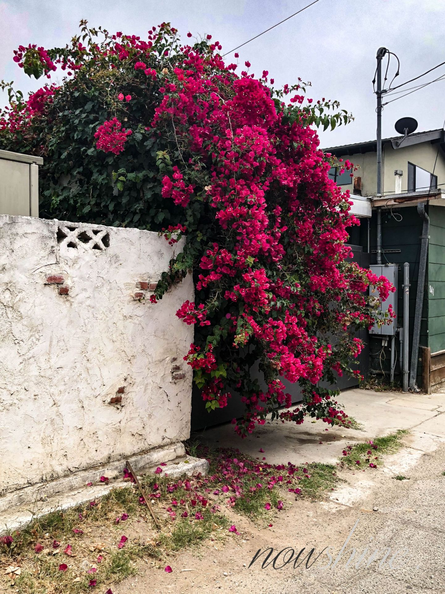 Venice, Los Angeles - Nowshine ü 40 Reiseblog
