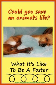 Saving an Animal's Life by Fostering
