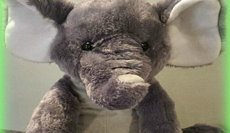 Elephant 7 Weight Loss Journey