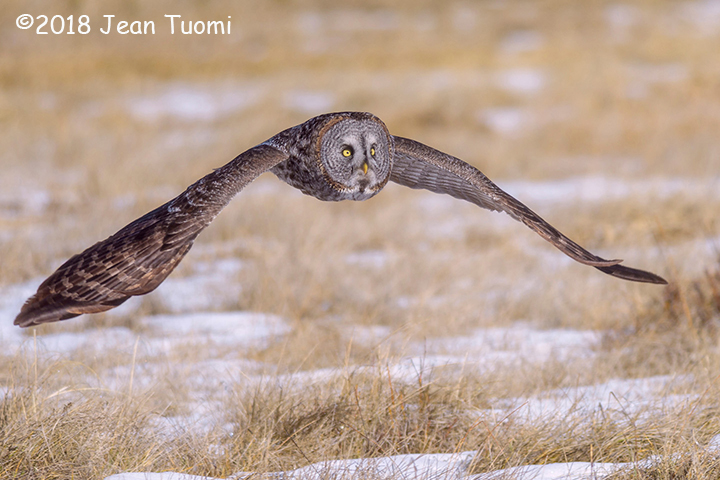 2nd Place Wildlife - Morning Hunt by Jean Tuomi