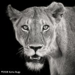 HM Wildlife - Eyes On You by Katie Rupp