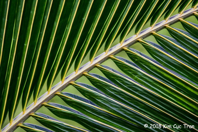1st Place Plant Life - Palm Pattern by Kim Cuc Tran