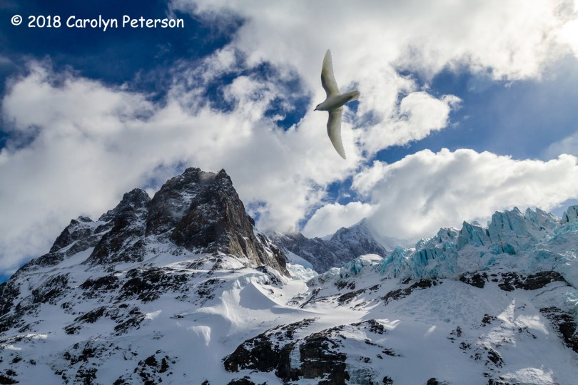 3rd Place Scenic - Drygalski Fiord by Carolyn Peterson
