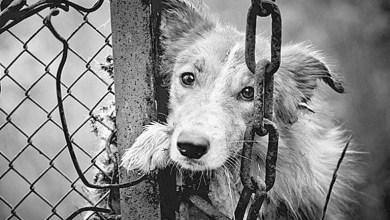 Photo of Αυστηρή εγκύκλιος του Αρείου Πάγου για κακοποίηση ζώων: Συλλήψεις και αυτόφωρο για τους δράστες