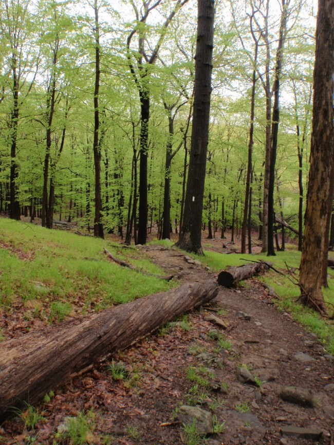 Trail leading through the woods