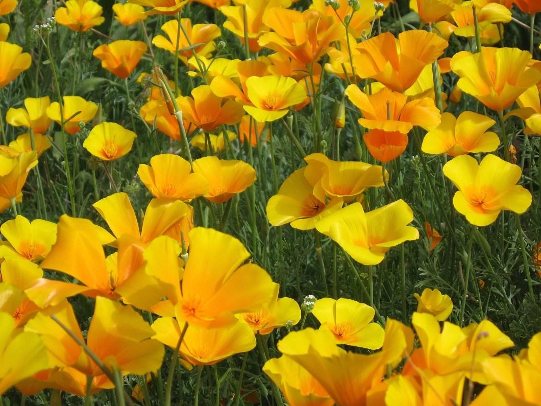 Yellow Flower Logo Name Kayaflower