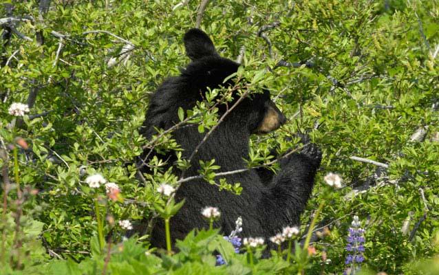 Temperate Rainforest Ecology Kenai Fjords National Park