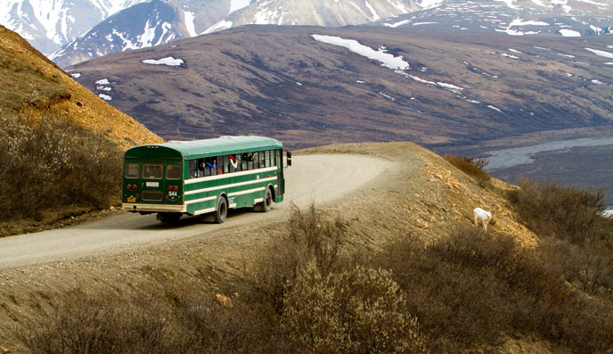 green bus stopped along a dirt road, mountains in the distance, and a sheep downslope.