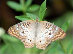 Butterflies Everglades National Park U S National Park