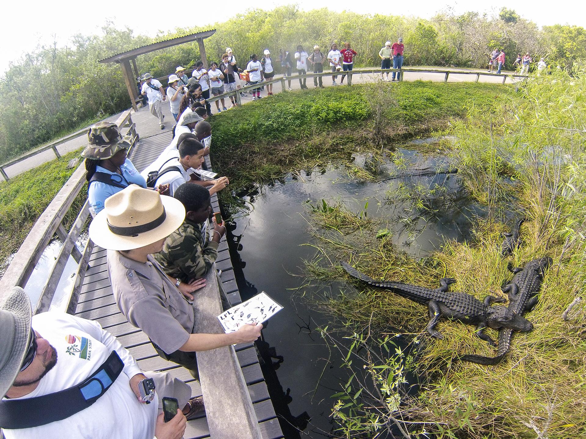 florida, miami, caimanes, aligator, everglade, everglades, national park, eeuu, estados unidos, top, mejores, parques nacionales, mas bonitos, unesco