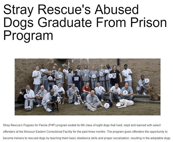 Stray rescue3