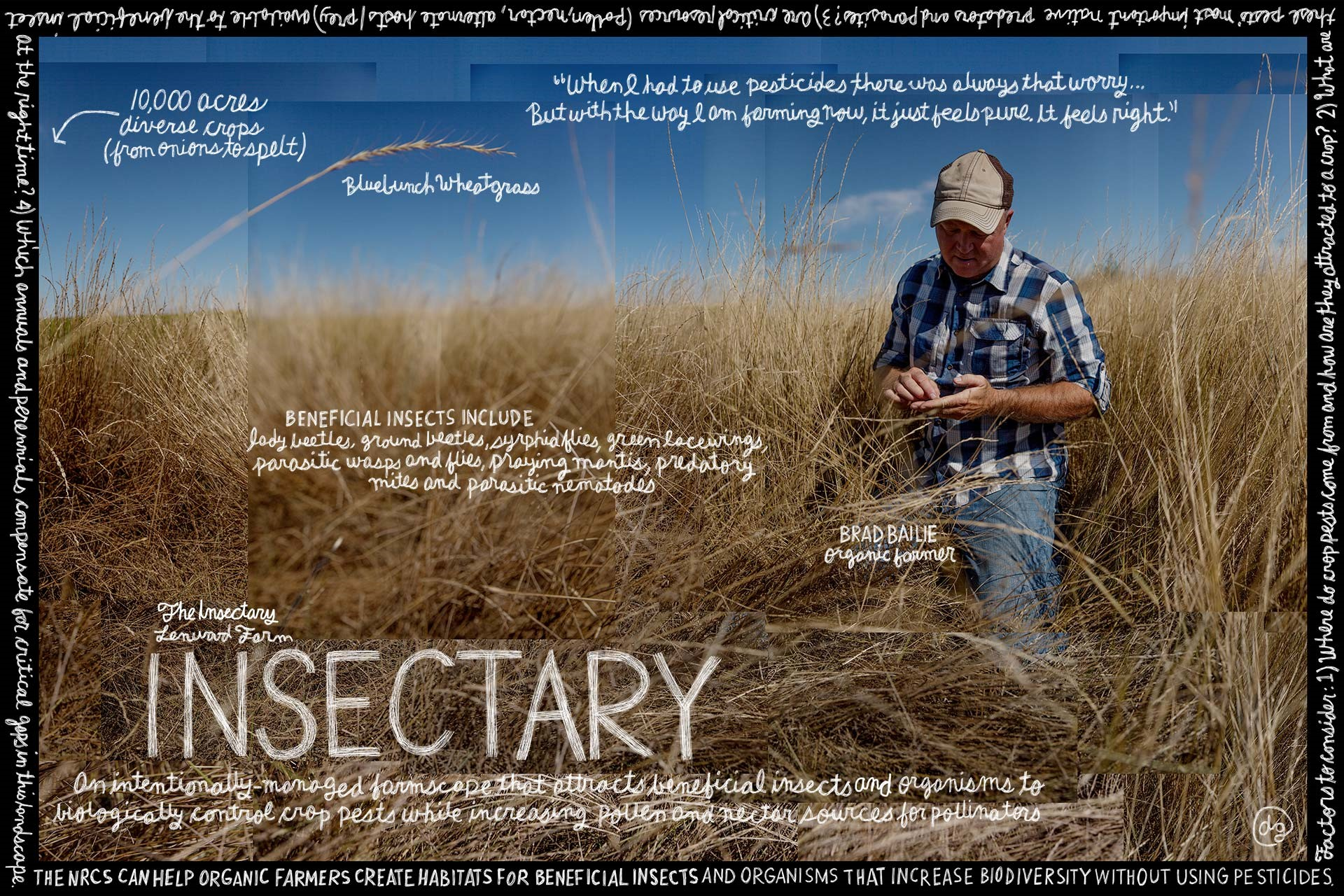 Insectary image