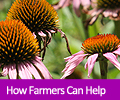 How farmers can help pollinators.