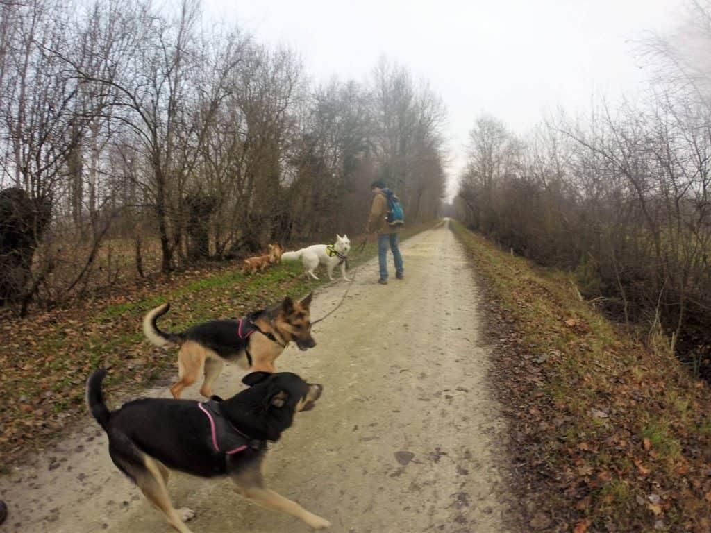 Sortie chiens libres - 18 Décembre 2016 (18)