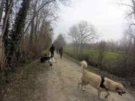Sortie chiens libres - 18 Décembre 2016 (19)