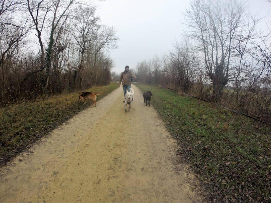 Sortie chiens libres - 18 Décembre 2016 (28)