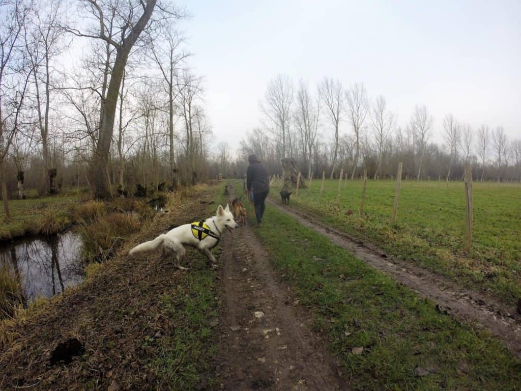 Sortie chiens libres - 18 Décembre 2016 (36)