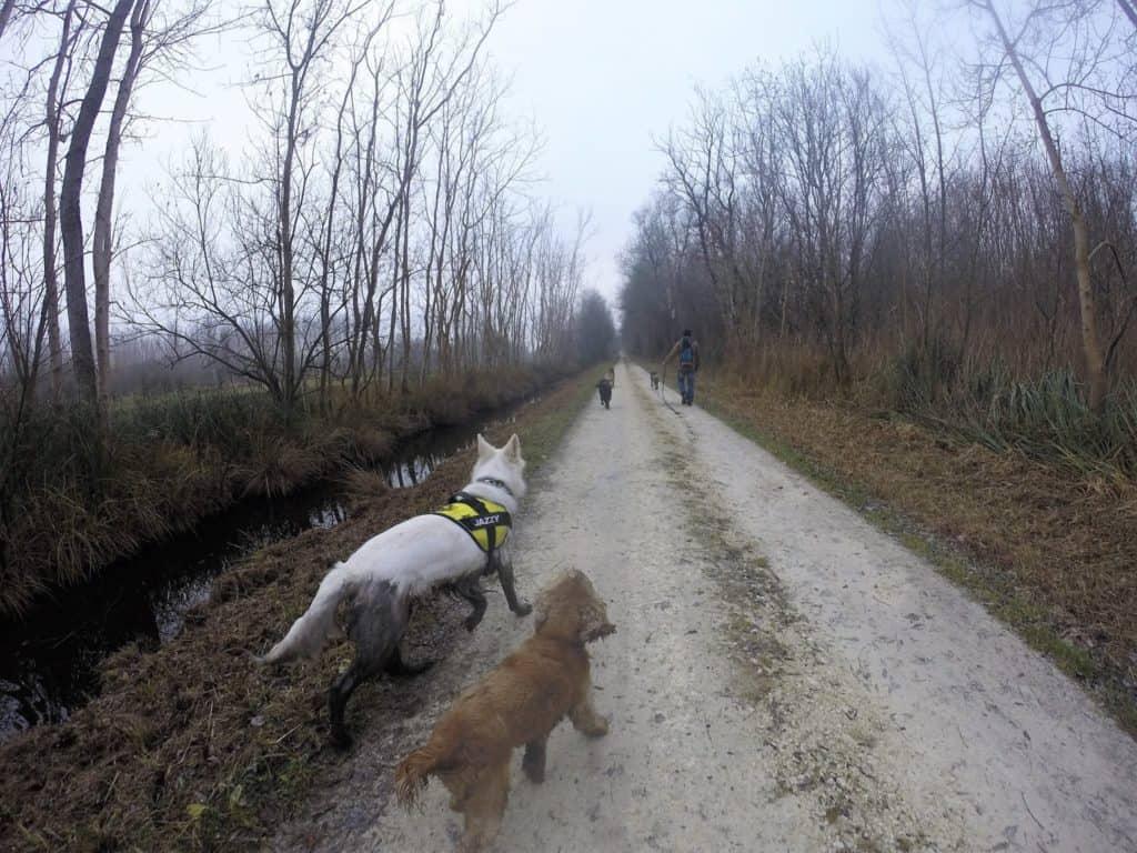 Sortie chiens libres - 18 Décembre 2016 (5)