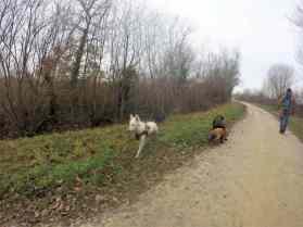 Sortie chiens libres - 18 Décembre 2016 (6)
