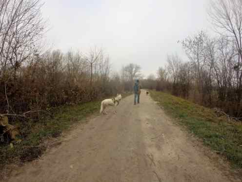Sortie chiens libres - 18 Décembre 2016 (9)