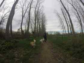 Sortie chiens libres - 26 Mars 2017 (7)