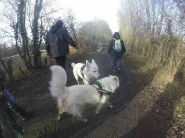 Sortie chiens libres - 29 Janvier 2017 (19)