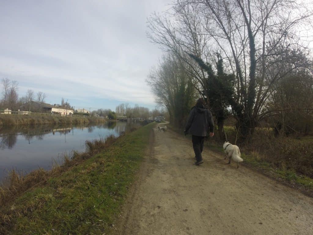 Sortie chiens libres - 29 Janvier 2017 (7)