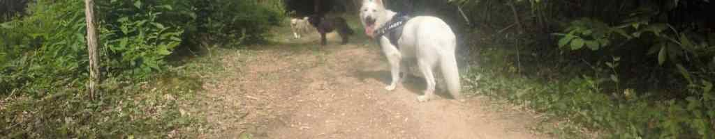 Sortie chiens libres – 25 Juin 2017