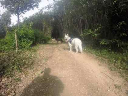Sortie chiens libres - 25 Juin 2017 (10)