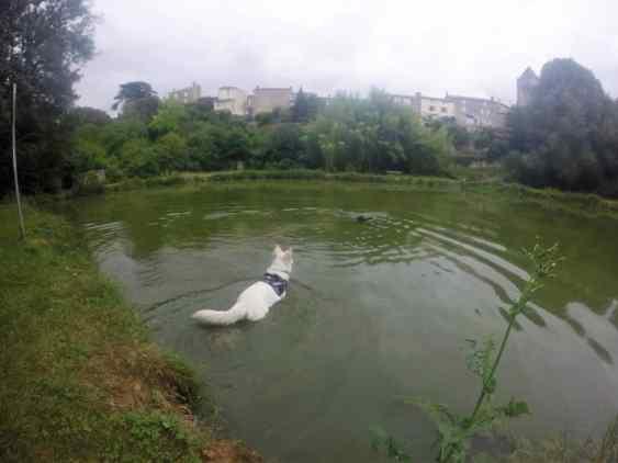 Sortie chiens libres - 25 Juin 2017 (12)