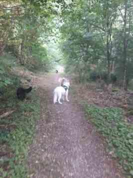 Sortie chiens libres - 25 Juin 2017-Bis (11)