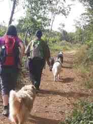 Sortie chiens libres - 25 Juin 2017-Bis (14)